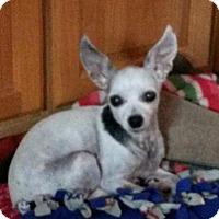 Adopt A Pet :: Sparkles - Seattle, WA