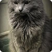 Adopt A Pet :: Killian - Fairborn, OH