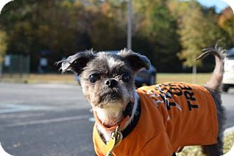 Shih Tzu Mix Dog for adoption in Gloucester, Virginia - THEODORE ROOSEVELT