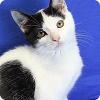 Adopt A Pet :: Finnegan - Winston-Salem, NC
