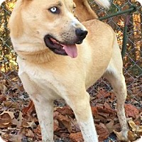 Adopt A Pet :: Skunkie - Brattleboro, VT