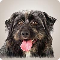 Adopt A Pet :: Bubba - Prescott, AZ