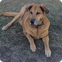 Adopt A Pet :: Bernard - Fargo, ND