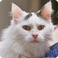 Adopt A Pet :: Julie - Homewood, AL