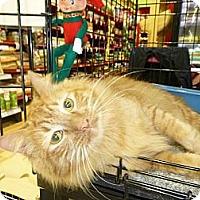 Adopt A Pet :: Orange Julius - College Station, TX