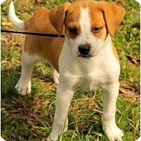 Adopt A Pet :: Darby - Staunton, VA