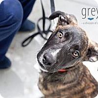 Adopt A Pet :: King - Mission Viejo, CA