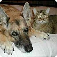 Adopt A Pet :: Cougar - Toronto, ON