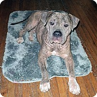 Adopt A Pet :: Lucy - Tallahassee, FL