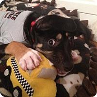 Adopt A Pet :: Hank - Cleveland, OH