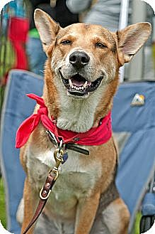 German Shepherd Dog Mix Dog for adoption in North Hollywood, California - Radar