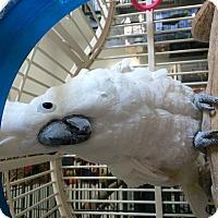 Adopt A Pet :: Charley - Punta Gorda, FL