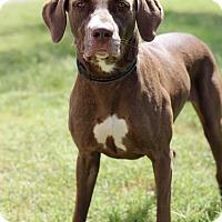 Adopt A Pet :: Hazel - McAllen, TX
