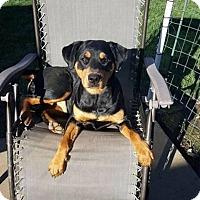 Adopt A Pet :: Lexi - San Martin, CA