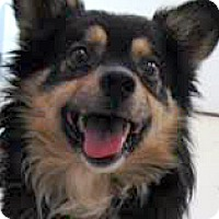 Adopt A Pet :: Julius-ADOPTION PENDING - Boulder, CO