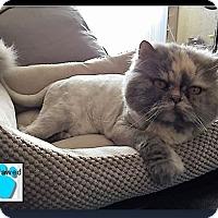 Adopt A Pet :: Cara - Gilbert, AZ