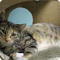 Adopt A Pet :: Sage - West Des Moines, IA