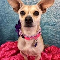 Adopt A Pet :: Honey - Lake Elsinore, CA