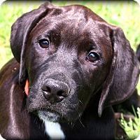 Adopt A Pet :: Luke~adopted! - Glastonbury, CT