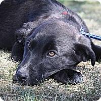 Adopt A Pet :: Fabio - Broomfield, CO