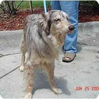 Adopt A Pet :: Ivan - Orlando, FL