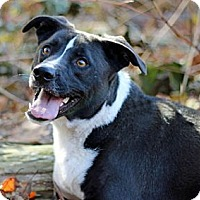 Adopt A Pet :: Branson - Port Washington, NY