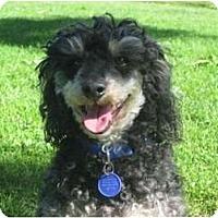 Adopt A Pet :: Professor - Los Angeles, CA