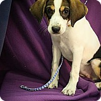 Adopt A Pet :: Mayo - Broomfield, CO