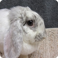 Adopt A Pet :: Addison - Newport, DE