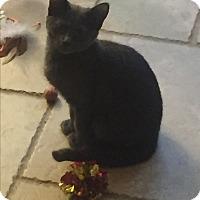 Adopt A Pet :: Racer - Sterling Hgts, MI