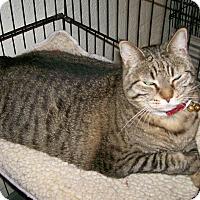 Adopt A Pet :: Bobbie - Scottsdale, AZ