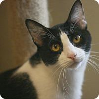 Adopt A Pet :: Elroy - Canoga Park, CA
