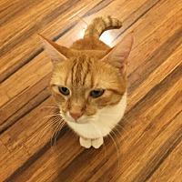 Adopt A Pet :: Tabitha - Bealeton, VA