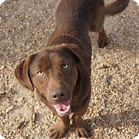 Adopt A Pet :: Jefferson in CT - Manchester, CT