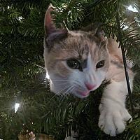 Adopt A Pet :: Mandy - Los Angeles, CA