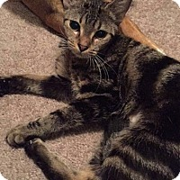 Adopt A Pet :: Lesley - Tampa, FL