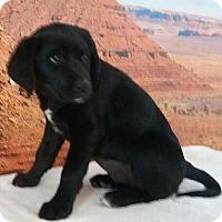 Adopt A Pet :: Pixie - Phoenix, AZ