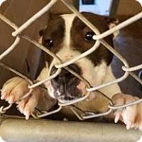 Adopt A Pet :: Paula's Foster - Yukon, OK