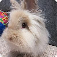 Adopt A Pet :: Kristoff - Newport, DE