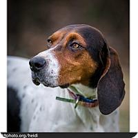 Adopt A Pet :: Heidi - Sherman, CT
