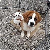 Adopt A Pet :: WINONA - WOODSFIELD, OH
