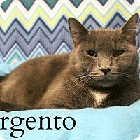 Adopt A Pet :: Argento - Melbourne, KY
