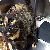 Adopt A Pet :: Juniper - Las Vegas, NV