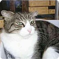 Adopt A Pet :: Oscar - New Port Richey, FL