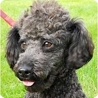 Adopt A Pet :: Riley - Kingwood, TX