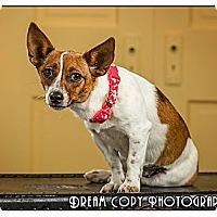 Adopt A Pet :: Boogie Woogie - Owensboro, KY