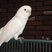 Adopt A Pet :: alex - Sylmar, CA