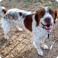 Adopt A Pet :: Tino - Phoenix, AZ
