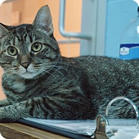 Adopt A Pet :: Fiona - Evansville, IN