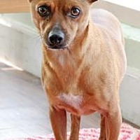 Adopt A Pet :: Toto - Santa Paula, CA